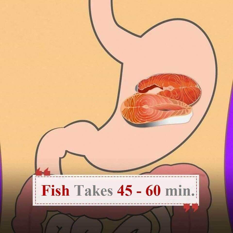 Pesce sullo stomaco